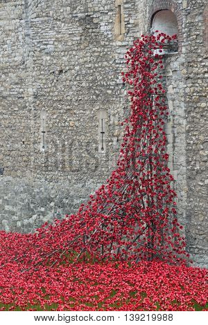 TOWER of LONDON UK 16 September 2014: Rememberance poppies flowing at tower