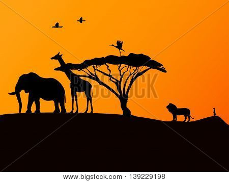 Vector illustration picture background African sunset and animals.