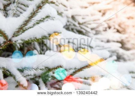 Spruce Branches Covered With Snow, Blurred