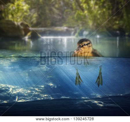 a baby duck floating in a pond with a split level view of above and below
