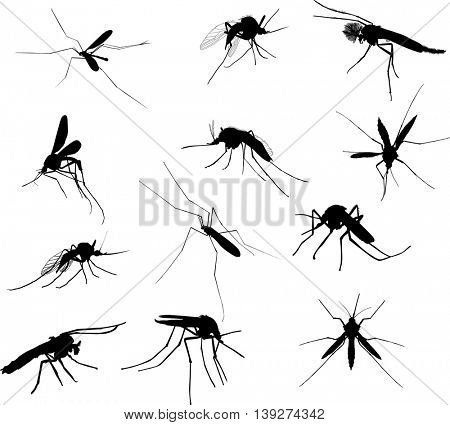 illustration with twelve mosquito silhouettes isolated on white background