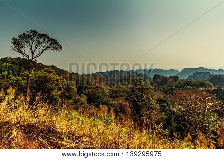 A tree on a mountaintop over the forests of the Laos countryside