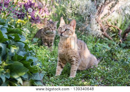 cats are playing in colorful garden. pets