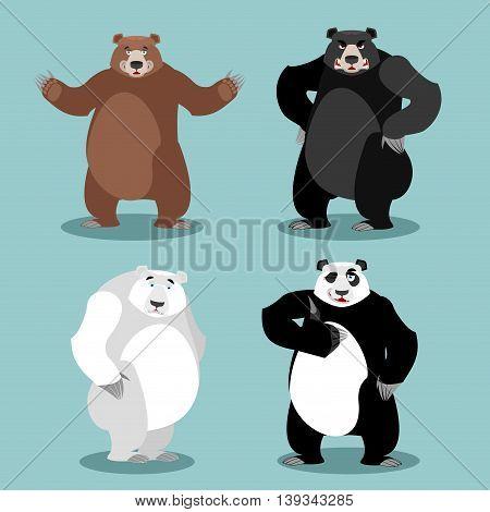 Bears Set Breed. Grizzly And Panda. American Black Bear Baribal. Polar. Different Poses Wild Animal.