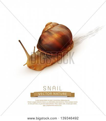 vector snail crawling on a white background