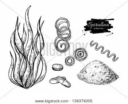Spirulina seaweed powder hand drawn vector. Isolated Spirulina algae powder and pills drawing on white background. Superfood engraved style illustration. Organic healthy food sketch