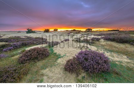 Shifting Sands And Heath Sunset