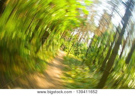 Green forest radial blur background. Nature composition.