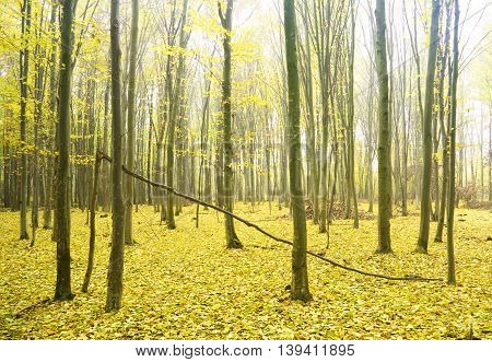 Path leading through the autumn forest. Nature composition.