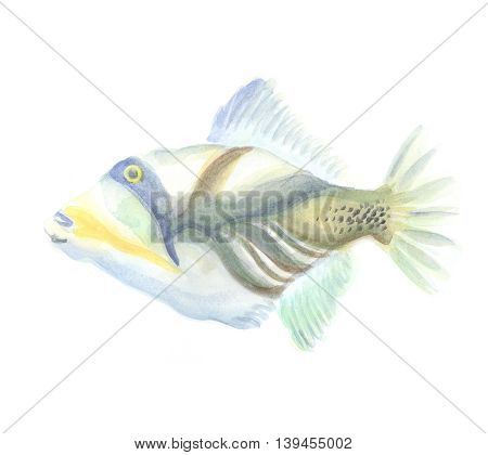 Triggerfish. Exotic decorative fish on a white background. Watercolor painting