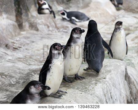 Penguins On Snow Ice