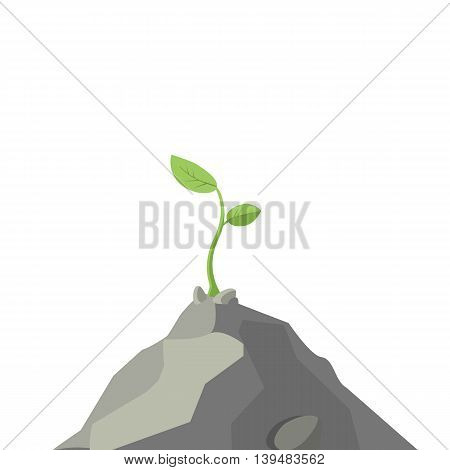 The plant is growing on a rock, colorful vector flat illustration