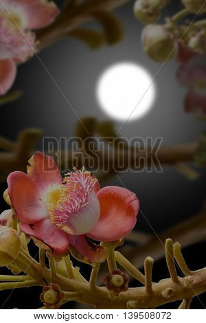 Effects of cannonball tree at night & blur moon.