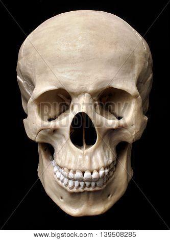 Human skull model isolabed over black background