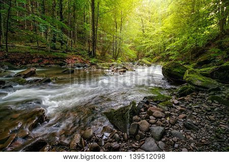 Mountain stream flow through ancient green forest in summer time