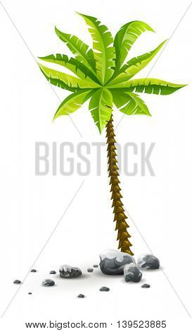 Single tropical coconut palm tree plant with green leaves in stones nature detail vector illustration of coco palm-tree isolated on white transparent background