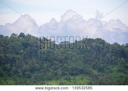 Savanna grass field with mountain in Thung Yai Naresuan East Wildlife Sanctuary - The world heritage site, Tak Thailand.
