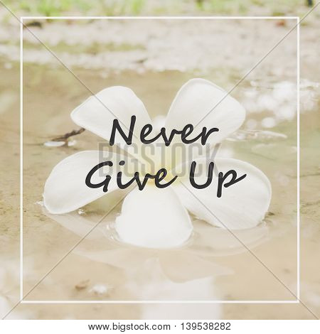 Inspirational Motivational Quote On White Plumeria On The Ground - Vintage Filter Effect