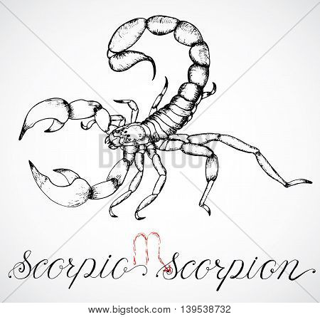 Hand drawn astrological zodiac sign Scorpion or Scorpio. Line art vector illustration of engraved horoscope symbol of insect. Traditional style. Doodle drawing and sketch with calligraphic lettering poster