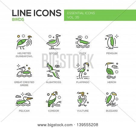 Birds - set of modern vector line design icons and pictograms of animals. Helmeted guineafowl, goose, duck, penguin, great crested grebe, albatross, flamingo, heron, pelican, vulture, condor buzzard