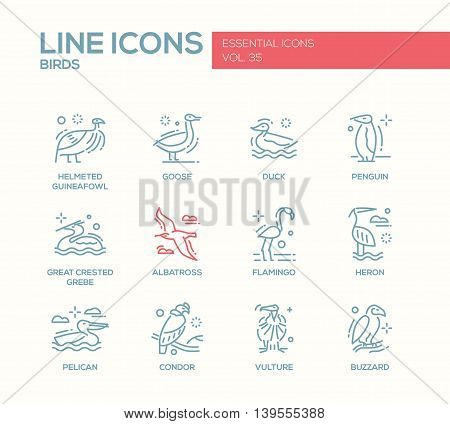 Birds - set of modern vector plain line design icons and pictograms of animals. Helmeted guineafowl, goose, duck, penguin, great crested grebe, albatross, flamingo, heron, pelican, vulture, condor buzzard