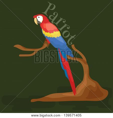 Domestic animal, isolated macaw parrot with beak and wings, pets background, tropical bird on white vector illustration pictograms