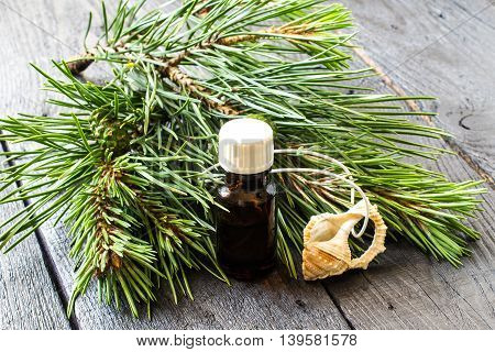 Pine essential oil in the small brown pharmaceutical vial and pendant aromatic pine branches (Pinus silvestris) with green cones on dark wooden table