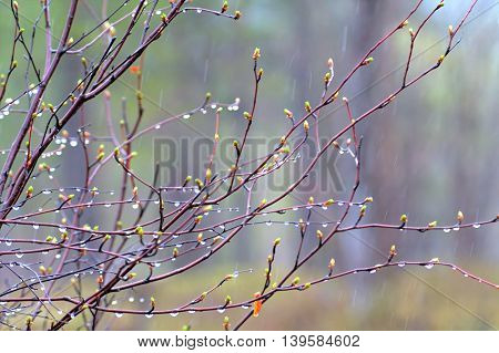 Rain drops and fog build up on the branches. Posting closeup camera