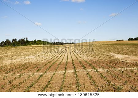 Agricultural field nak this position the cracked earth. early summer
