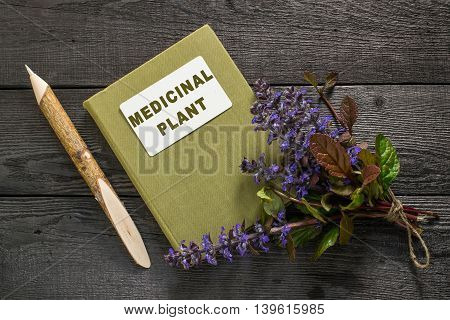 Medicinal plant Ajuga reptans and herbalist handbook. Used in herbal medicine and as an edible plant in horticulture nectariferous