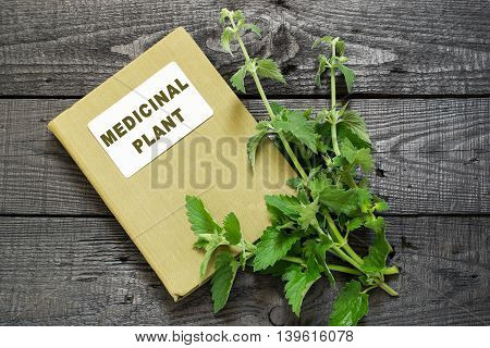 Medicinal plant melissa officinalis and herbalist handbook on a dark wooden table