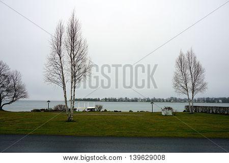 White birch trees (Betula papyrifera) grow along the lakefront in Wequetonsing, Michigan.
