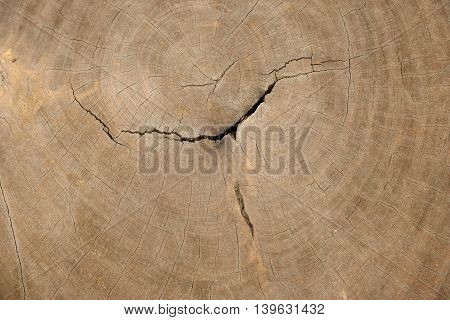 Cross section log texture,Wodden texture or background