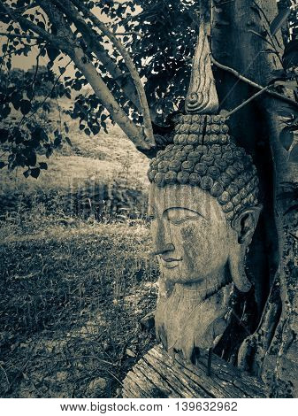 Ancient wooden Buddha statue head cracked and burned on bodhi tree background in hermitage at northern of thailand Split Tone Filter