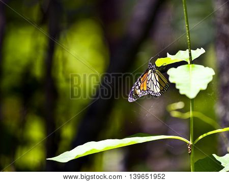 Butterfly in Nature on leaf in detail