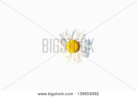 detail of chamomile isolated on white background
