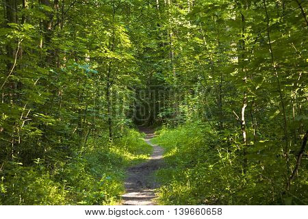 Forest Trail With Sunbeams