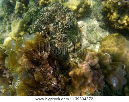 Clownfish and sea anemone Population and Environment in sea of Thailand.
