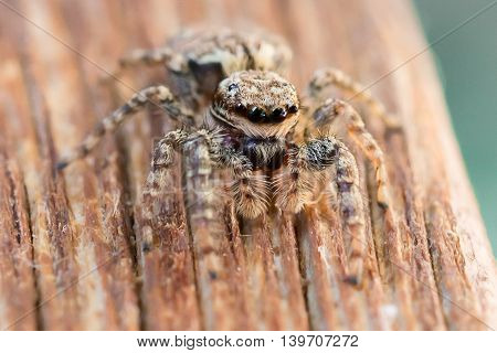 Detail shot of a little spider outdoor
