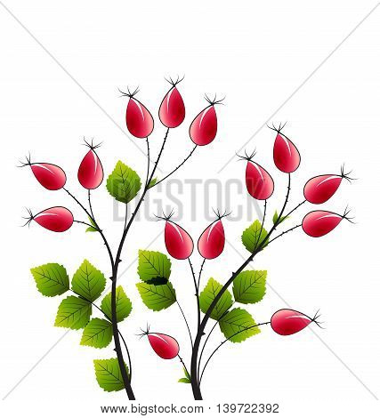 Vector illustration rose hip, colorful autumn bush