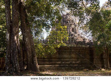 The jungle encroaching on Ta Prohm Temple, Angkor, Cambodia.