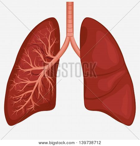 Human Lung anatomy diagram. Illness respiratory cancer graphics. Vector