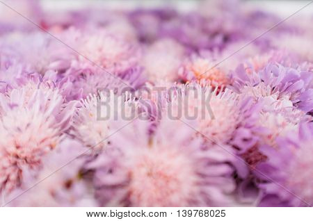Violet flowers closeup, blurred blossom background. Placer of purple asters