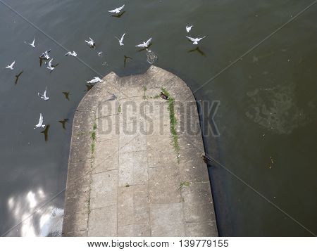 Flock Of Seagulls Flying From A Concrete Plateau