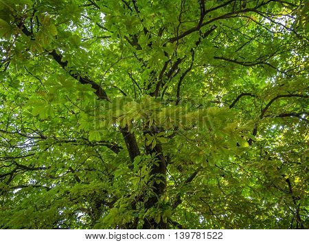 High drammatic trees in the forest during the day