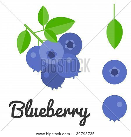 Vector blueberry with leaf, flat design with blueberry text