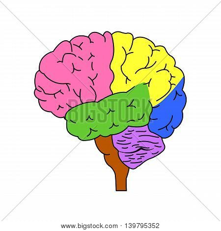 Shares of the brain. Isolated brain side view. Illustration of human brain for medical design, study or concept for logo design. Easy recolor.
