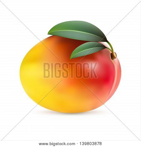Mango fruit with leaves isolated on white background realistic vector illustration