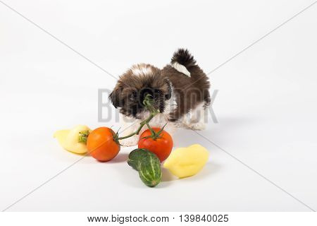 Little shih tzu puppy with vegetables isolated on the white background