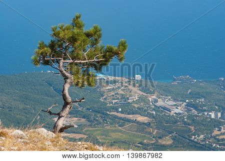 Landscape with lonely pine-tree growing on the edge of precipice in Crimean mountains